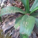 """Pflanzen werden von Touristen für """"Wir waren hier!""""-Nachrichten missbraucht."""